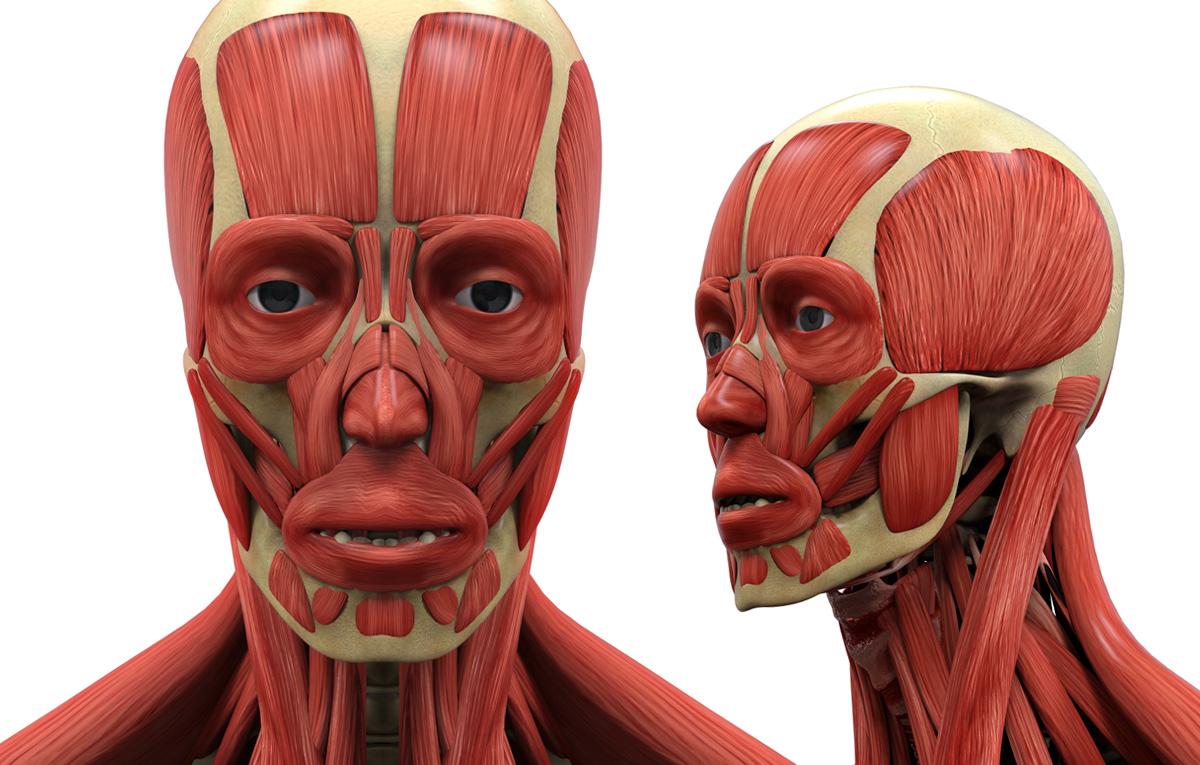 تصاویر آرشیوی آناتومی بدن